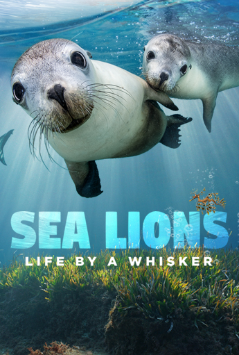 sea lions life by a whisker 3D