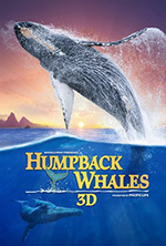 Humpback Whales 3D poster